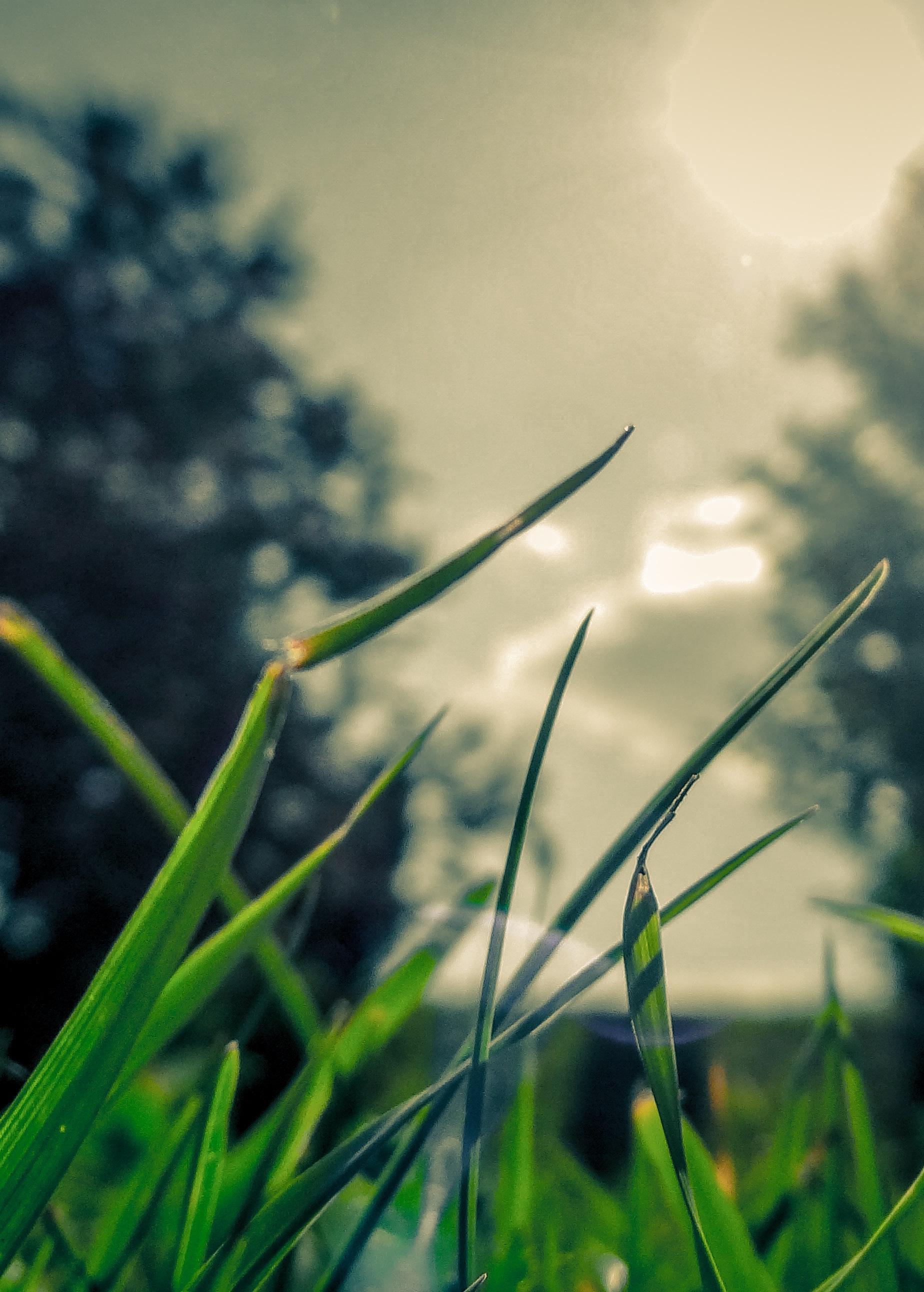 grass2-tall