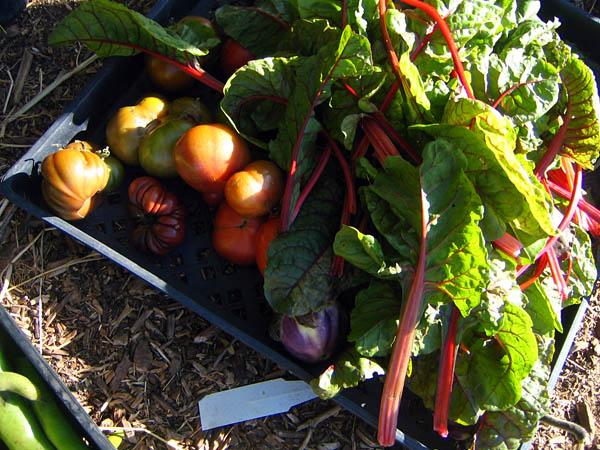 alemany-farm-produce