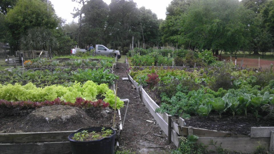 Sustainable-Urban-Agriculture-Coalition-3