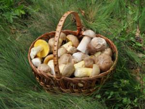 Edible_fungi_in_basket_2012_G1_editMMK